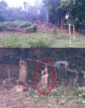 Árvores já foram derrubadas para construção dos barracos. (Foto: Noel Rodrigues / Ipiaú On Line)
