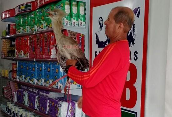 Um mototaxista que trabalha no local conseguiu conter a ave. (Foto: Noel Rodrigues/Ipiaú On Line)