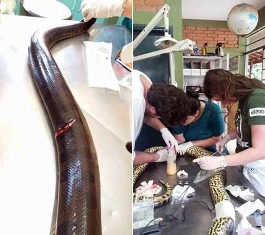 Os veterinários limparam os ferimentos e fizeram cerca de 60 suturas nos cortes.
