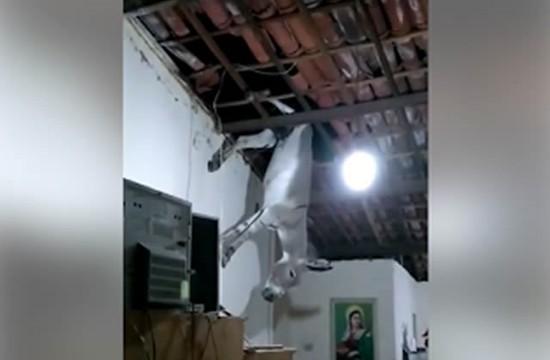 Jumento caiu no telhado de uma casa em Cajazeiras, no Sertão da Paraíba (Foto: José Klebson/Arquivo Pessoal)