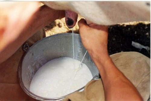 qualidade-leite