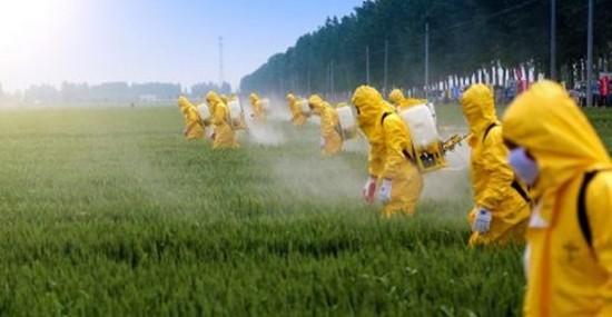 Brasil utiliza 15 agrotóxicos proibidos no mundo.
